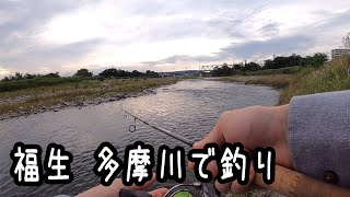 福生 多摩川で釣り