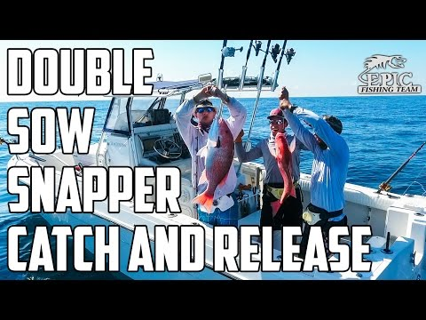 Episode 001   Double Sow Snapper Catch and Release