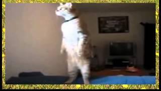 Патриатичечкий кот
