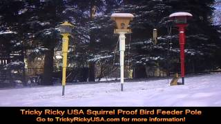 Tricky Ricky Usa Squrrel Proof Bird Feeder Pole