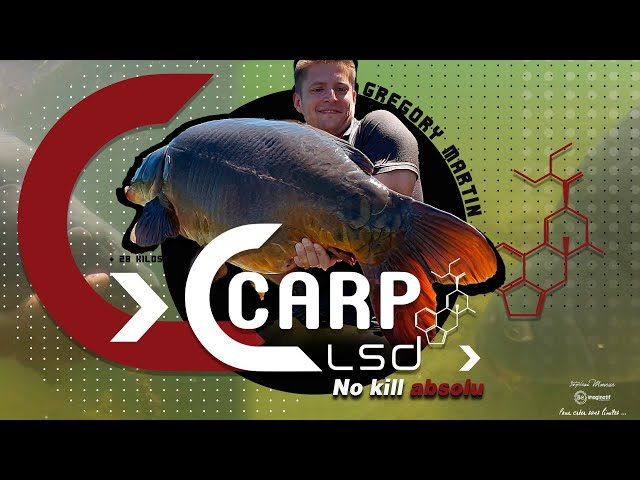 CARP LSD TV | NO KILL ABSOLU de Grégory MARTIN