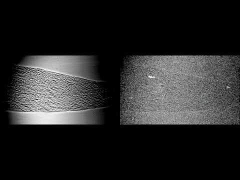 Synchrotron x-ray visualisation of ice formation in insects during lethal and non-lethal freezing