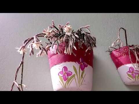 Você conhece a flor do Ripsalis policarpa? #RipsálisDourado
