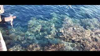 Египет Шарм эль Шейх Рыбки релакс море с пирса Rehana Royal Beach Resort Spa 5