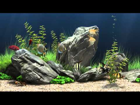 Dream Aquarium Virtual Fishtank #1