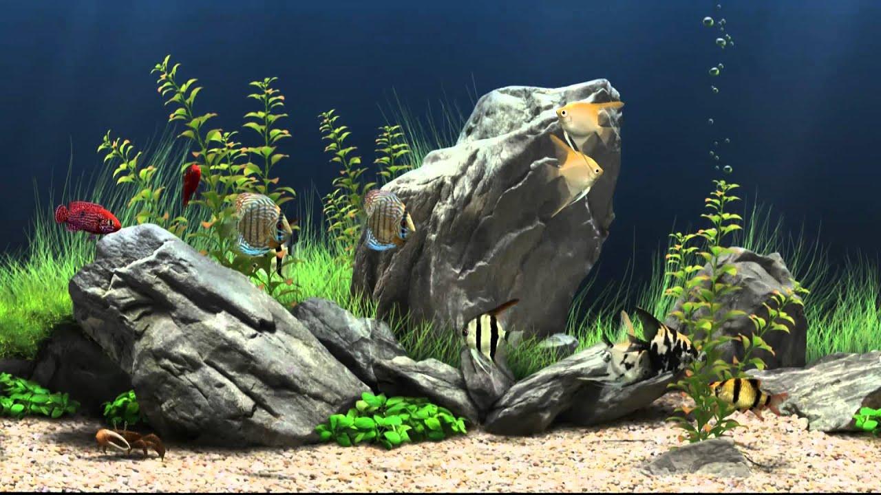 Wallpaper 3d Bergerak Free Download Dream Aquarium Virtual Fishtank 1 Youtube