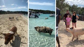 Pigs Swim Around On Their Own Island