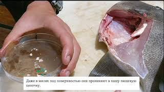 Sustainable Fur Russian Subtitles