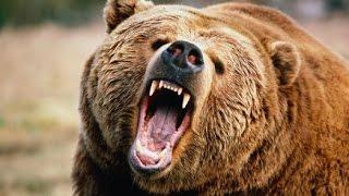 """Как вести себя при встрече с  медведем. (Видео материалы ИА """"ТРИО"""""""