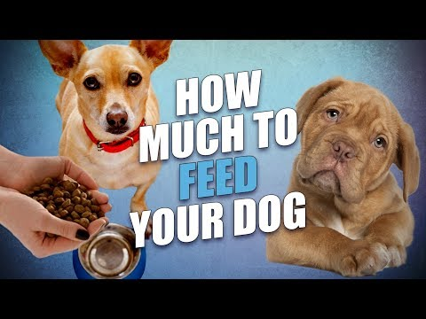 How Much To Feed A Dog (Commercial And Homemade Foods)