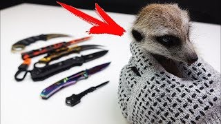 Checking the Armored Gloves with my Meerkat and my New Knife Collection from China !!!