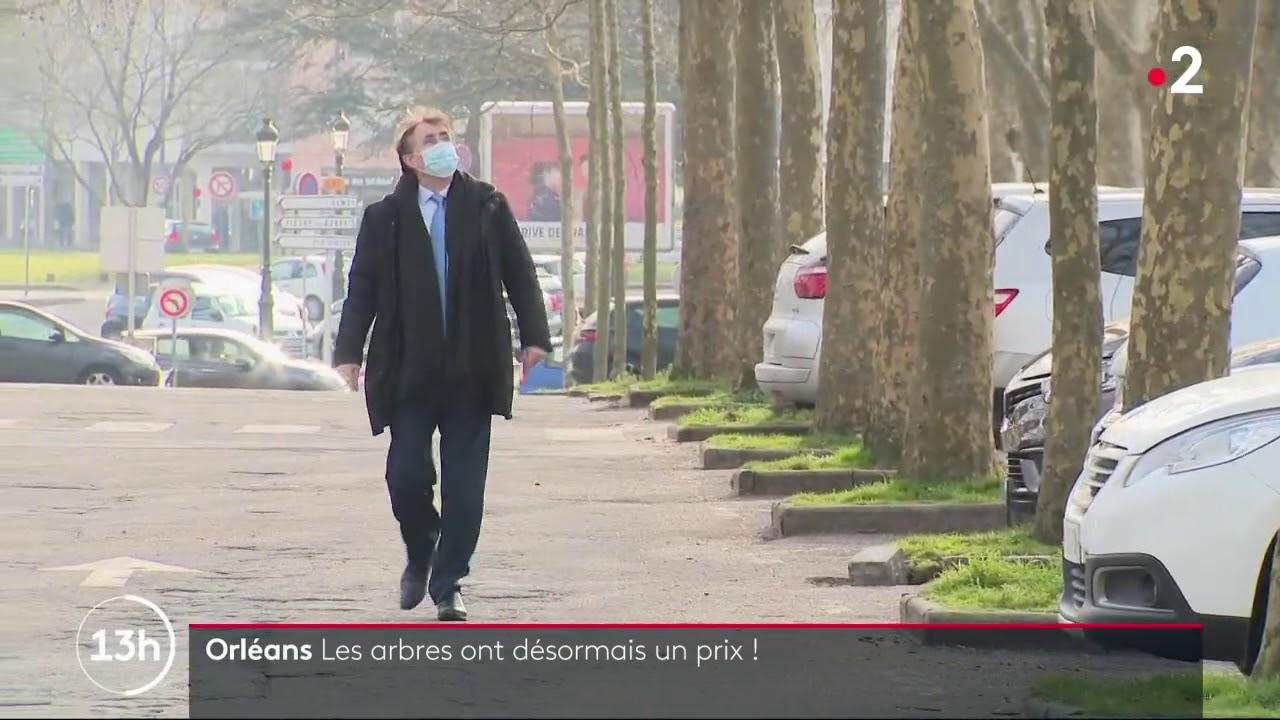 France 2 - JT de 13h - 08/03/2021 - La protection des arbres à Orléans