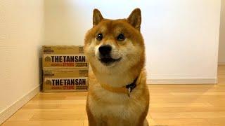 柴犬さんの連休の楽しみ方。