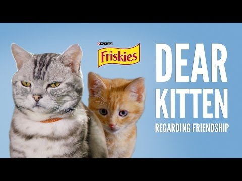 Dear Kitten: Regarding Friendship