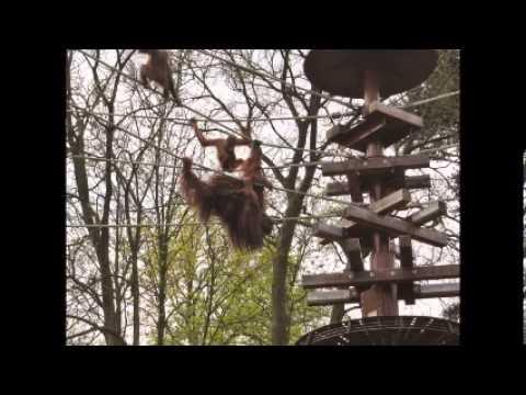 Клип The Kinks - Animals In the Zoo