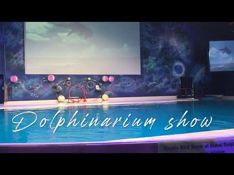 Dubai Dolphinarium – UAE's Dolphin & Seal Show – The Real Explorer