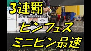 2017年10月1日こもれびの森イバランドでピンフェス2017が開催!ミニピン...