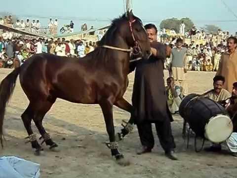 Horse Dance Pir Pappu Shah of Chak Nabi pur