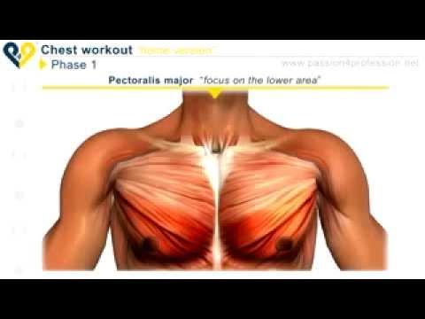 Membesarkan otot dada dengan Push Up