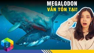 """Sự Thật Về Loài Cá Mập Siêu To Khổng Lồ """"MEGALODON 🦈🦈🦈"""""""