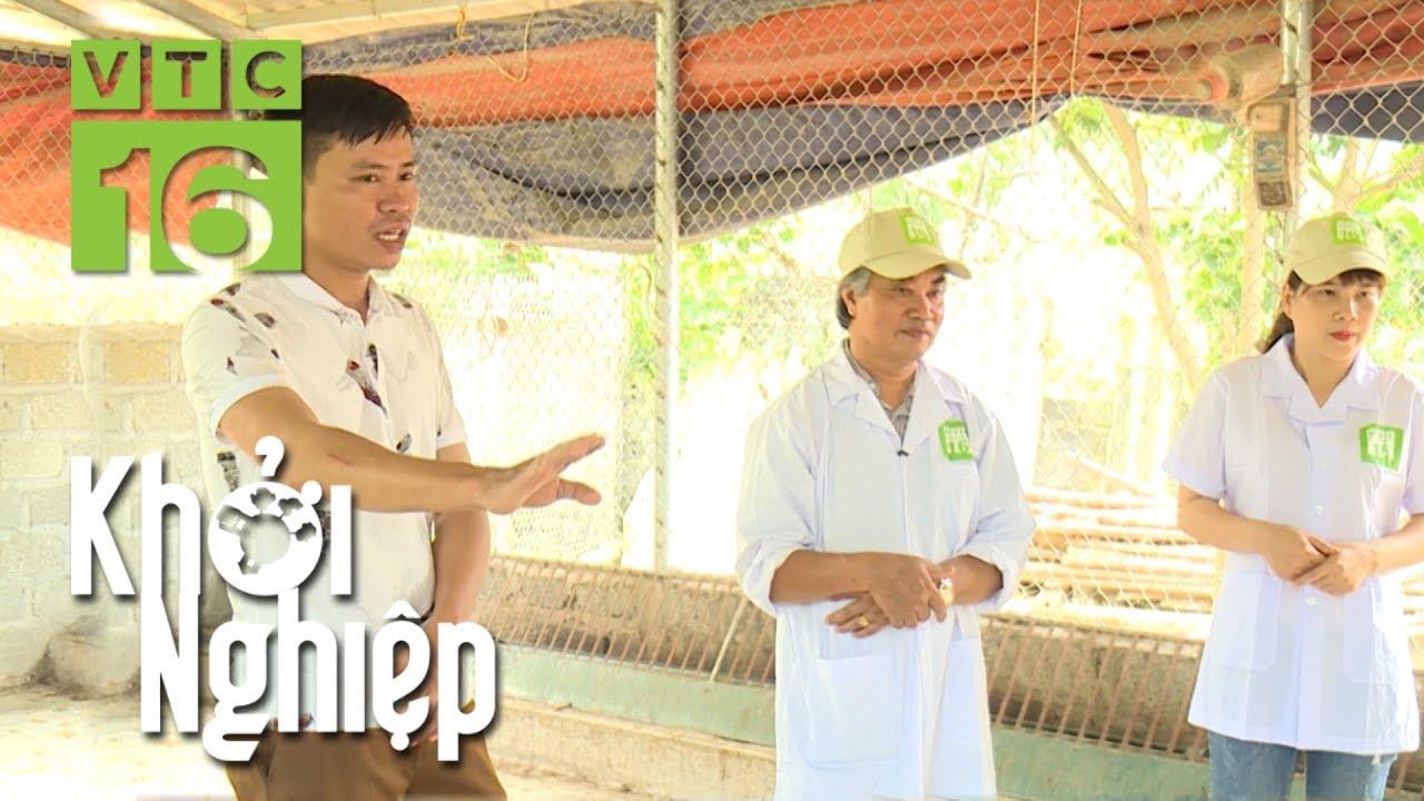 Nông hộ xây chuồng khổng lồ để nuôi gà | Khởi nghiệp 520 | VTC16