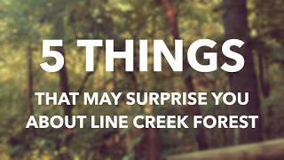 5 THINGS THAT MAY SURPRISE YOU ABOUT THE LINE CREEK FOREST