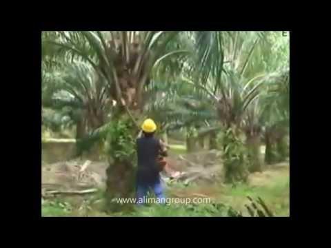 Palm oil Motorized cutter Mesin Cantas Kelapa Sawit
