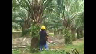 Palm oil Motorized cutter Mesin Cantas Kelapa Sawit