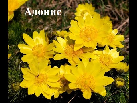 Эти цветы подходят для солнечного участка  Фото и названия