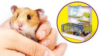Mnóstwo Zabawy Dla Chomików: Otwieranie Paczki Z Domkiem Critterville!