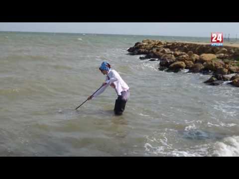 В Азовском море начнётся добыча креветок