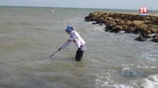 В Азовському морі почнеться видобуток креветок