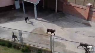 Doberman kennel by drone