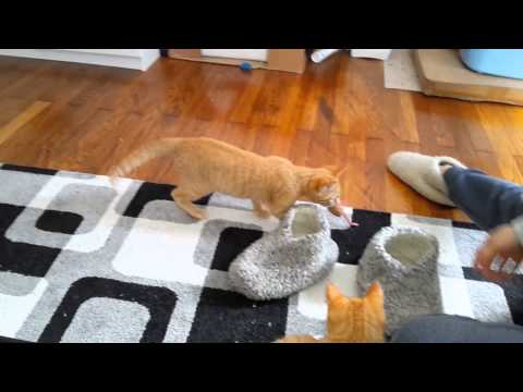 Miezi & Miez – cat fetches toy like a dog