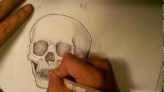 How to Draw a SKULL - Phase 4 - Skull Drawings
