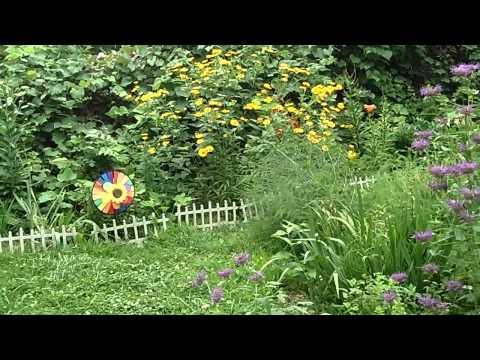 Chinese American organic garden, 2015.