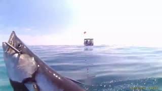 Spearfishing in the FL Keys 2016