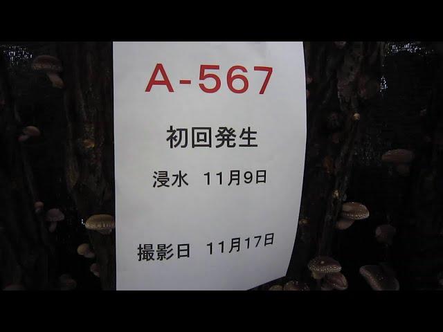 A567 初回発生2020