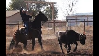 Curly Bill - Big Stout Brown Gelding Head & Heel Horse FOR SALE