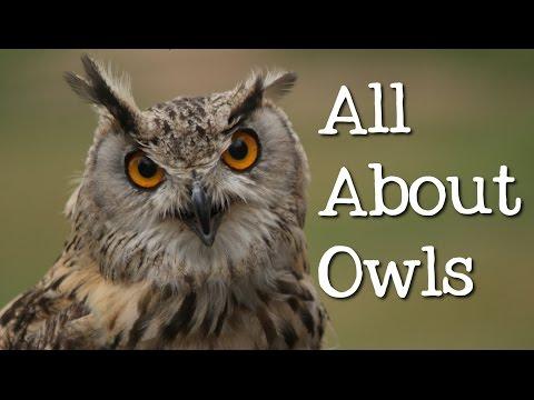 All About Owls for Kids: Backyard Bird Series - FreeSchool