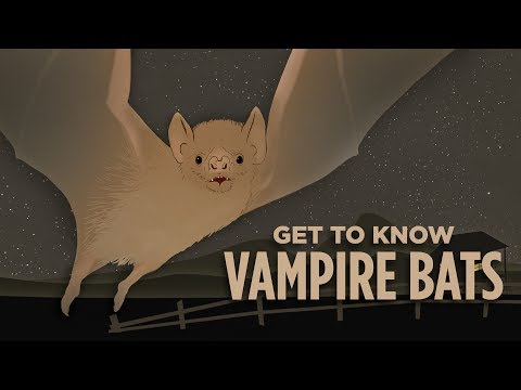 What Would We Lose If We Wiped Out Vampire Bats? | NPR