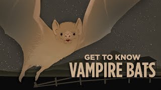 What Would We Lose If We Wiped Out Vampire Bats? | NPR's SKUNK BEAR