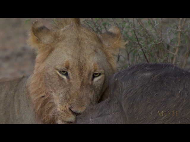 The Lion Sands Experience; A visual journey.