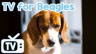 Dog TV! TV for Beagle Dogs! TV with Relaxing Music for Beagles! thumbnail