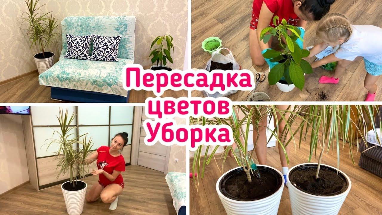 Пересадка цветов  Уборка в квартире 🧚🏻♀️ Мотивация 🍀