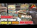 Bongkar Cucak Ijo Kapas Tembak Murai Dan Kacer Ready Juga Tl Gunung Kios Sigit Bajang Pb Pramuka  Mp3 - Mp4 Download