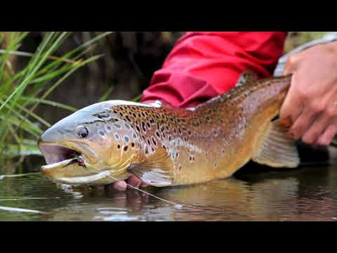 Game Changer | Fly Fishing In Chile
