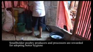 Supporting poultry biosecurity in Indonesia (English)