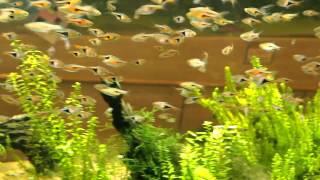 板橋区立熱帯環境植物館:ミニ水族館(音なし)
