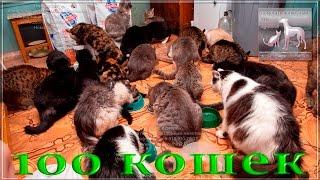 🐱Когда у тебя 💯 кошек что делать и как накормить? 🐱 a shelter for homeless animals